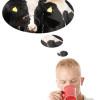 Laktóz allergia, tejérzékenység az meg mi?